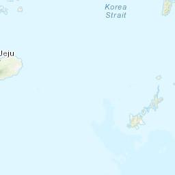 Abies koreana (Korean Fir)